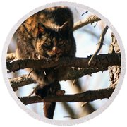 Round Beach Towel featuring the photograph Feral Cat In Pine Tree by William Selander