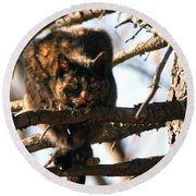 Feral Cat In Pine Tree Round Beach Towel