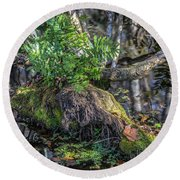 Fern In The Swamp Round Beach Towel
