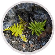Ferns In Volcanic Rock Round Beach Towel