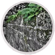 Ferns On Old Brick Wall Round Beach Towel