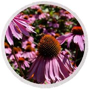 Field Of Echinaceas Round Beach Towel