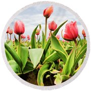 Round Beach Towel featuring the photograph Field Of Pink Tulips by Athena Mckinzie
