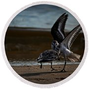 Fighting Sandpipers Round Beach Towel
