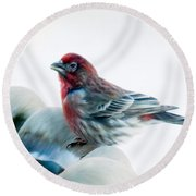 Round Beach Towel featuring the digital art Finch by Ann Lauwers