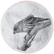 Finch Digital Sketch Round Beach Towel