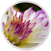 Round Beach Towel featuring the photograph Fire And Ice - Dahlia by Jordan Blackstone