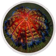 Round Beach Towel featuring the photograph Fire Sea Urchin by Sergey Lukashin