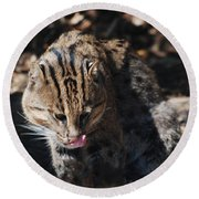 Fishing Cat Round Beach Towel by DejaVu Designs