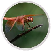 Flame Skimmer Dragonfly Round Beach Towel