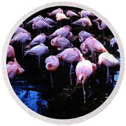 Round Beach Towel featuring the photograph Flamingo - Florida - Animals by Susan Carella
