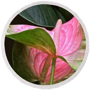 Flamingo Flower Round Beach Towel by Byron Varvarigos
