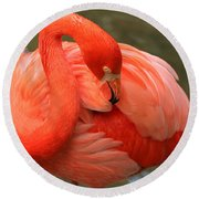 Flamingo Round Beach Towel by Larry Nieland