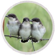Fledged Siblings Round Beach Towel by Bonfire Photography
