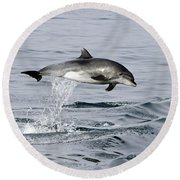 Flight Of The Dolphin Round Beach Towel