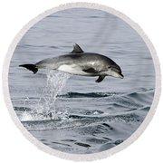 Flight Of The Dolphin Round Beach Towel