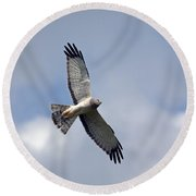 Flight Of The Harrier Round Beach Towel by Mike  Dawson