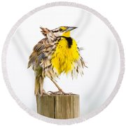 Flluffy Meadowlark Round Beach Towel