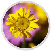Round Beach Towel featuring the photograph Floating Daisy by Joy Watson