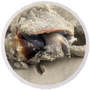 Round Beach Towel featuring the photograph Florida Fighting Conch by Meg Rousher