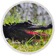 Gator Grin Round Beach Towel by Al Powell Photography USA
