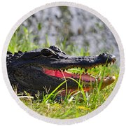 Gator Grin Round Beach Towel