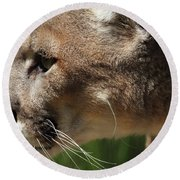 Round Beach Towel featuring the photograph Florida Panther Profile by Meg Rousher