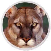 Florida Panther Round Beach Towel by Tom and Pat Leeson