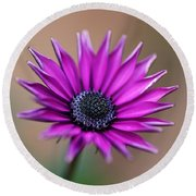 Flower-daisy-purple Round Beach Towel