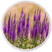 Flower - Speedwell Figwort Family - I Dream Of Lavender  Round Beach Towel