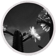 Flowering Cactus 4 Bw Round Beach Towel