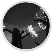 Flowering Cactus 4 Bw Round Beach Towel