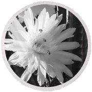 Flowering Cactus 5 Bw Round Beach Towel