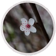 Flowering Plum 3 Round Beach Towel