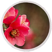 Flowering Quince Round Beach Towel by Lana Trussell