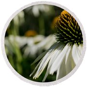 Flowers - Echinacea White Swan Round Beach Towel