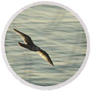 Round Beach Towel featuring the photograph Flying Seagull by Yulia Kazansky