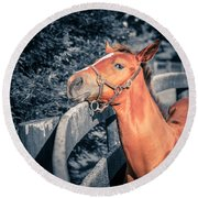 Foal By The Fence Round Beach Towel