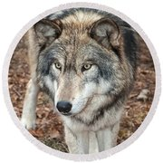 Round Beach Towel featuring the photograph Focused by Gary Slawsky