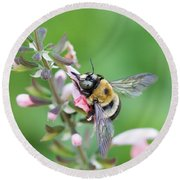 Foraging For Nectar Round Beach Towel