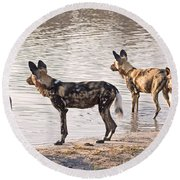 Round Beach Towel featuring the photograph Four Alert African Wild Dogs by Liz Leyden