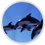 Four Bottle-nosed Dolphins Tursiops Round Beach Towel