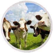 Four Chatting Cows Round Beach Towel