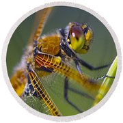 Four Spotted Chaser Round Beach Towel