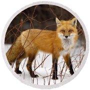 Fox In Winter Round Beach Towel
