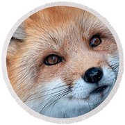 Round Beach Towel featuring the photograph Foxy Lady by Bianca Nadeau