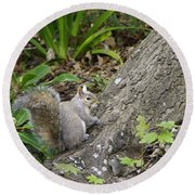 Round Beach Towel featuring the photograph Friendly Squirrel by Marilyn Wilson