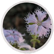 Round Beach Towel featuring the photograph Fringed Catchfly by Paul Rebmann