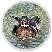 Round Beach Towel featuring the photograph Frisky - Wood Duck by Adam Olsen