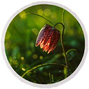 Round Beach Towel featuring the photograph Fritillaria Meleagris by Davorin Mance